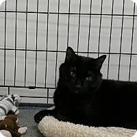 Adopt A Pet :: Mal - Plainville, MA