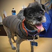 Adopt A Pet :: Rubble - Sharon Center, OH