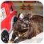 Photo 2 - Domestic Shorthair Cat for adoption in Yorba Linda, California - Bailey