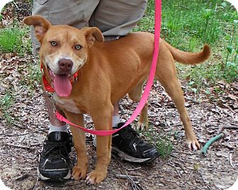 Labrador Retriever Mix Dog for adoption in Manhasset, New York - Adoption Pending -- Rosalie
