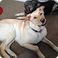 Adopt A Pet :: Diggity - Saskatoon, SK