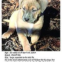 Adopt A Pet :: Nash - Ortonville, MI