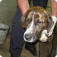 Adopt A Pet :: Sebastian - Rocky Mount, NC