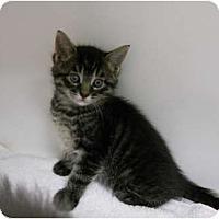 Adopt A Pet :: Cheeto - Maywood, NJ