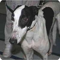 Adopt A Pet :: MRK Lucky Travis (