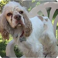 Adopt A Pet :: Fonzy - Sugarland, TX