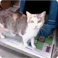 Adopt A Pet :: Callie - Greenville, SC