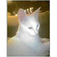 Adopt A Pet :: Gilbert (mixed breed) - Owasso, OK
