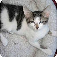 Adopt A Pet :: Lilly - Mount Laurel, NJ