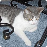 Adopt A Pet :: Echo - Richmond, VA