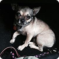 Adopt A Pet :: Gizmo - Eagle, ID