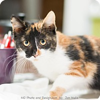 Adopt A Pet :: Kelly - Fountain Hills, AZ