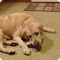 Adopt A Pet :: Lucy Lu - Lewisville, IN