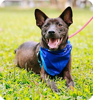 Labrador Retriever Mix Puppy for adoption in Castro Valley, California - Auden