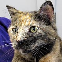 Adopt A Pet :: Sammi - Grinnell, IA
