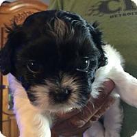 Adopt A Pet :: LIBBY - Hurricane, UT