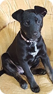 Terrier (Unknown Type, Medium) Mix Puppy for adoption in East Hartford, Connecticut - Shyler meet me 4/29