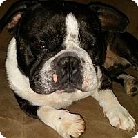 Adopt A Pet :: Benson - Jackson, TN