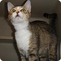 Adopt A Pet :: True - Ridgeland, SC