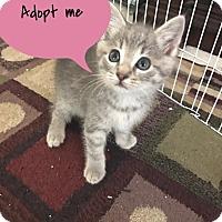 Adopt A Pet :: CASEY - Burlington, NC