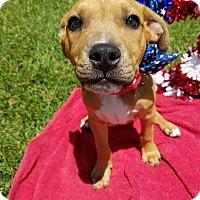 Adopt A Pet :: Monkey-Adopted! - Detroit, MI
