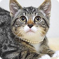 Adopt A Pet :: Louisa - Dublin, CA