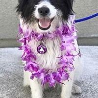 Adopt A Pet :: Mison D5683 - Fremont, CA