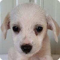 Adopt A Pet :: Alf - Lexington, KY