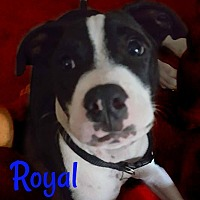 Adopt A Pet :: Royal - Des Moines, IA