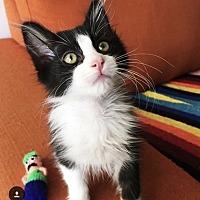 Adopt A Pet :: Billy - Los Angeles, CA
