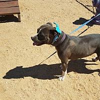 Adopt A Pet :: Mozzie - California City, CA