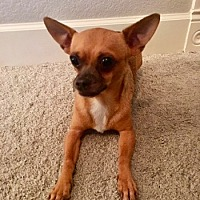 Adopt A Pet :: Mickey - Chandler, AZ