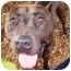 Photo 1 - American Pit Bull Terrier Mix Dog for adoption in Berkeley, California - Lena