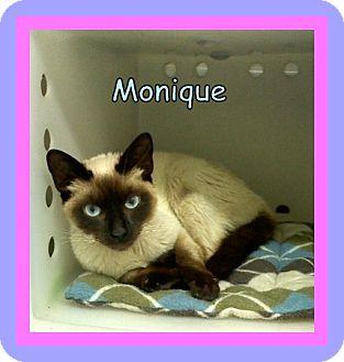 Siamese Cat for adoption in Corpus Christi, Texas - Monique
