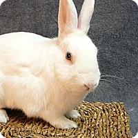 Adopt A Pet :: Logan - Newport, DE