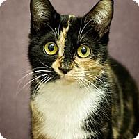 Adopt A Pet :: Brooke - Phoenix, AZ
