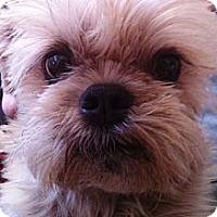 Adopt A Pet :: TOBY - ADOPTION PENDING - Mesa, AZ