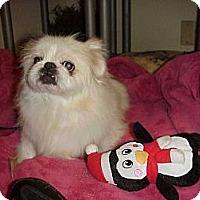 Adopt A Pet :: M A R I O - Cathedral City, CA