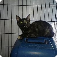 Adopt A Pet :: Sherry - Speonk, NY