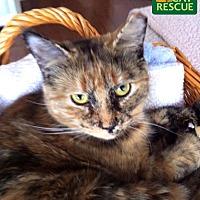 Adopt A Pet :: Claire - Oakville, ON