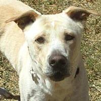 Labrador Retriever Mix Dog for adoption in Phoenix, Arizona - Chance