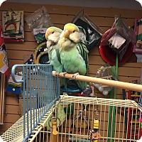 Adopt A Pet :: Ethel - Lenexa, KS