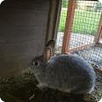 Adopt A Pet :: Blueberry - Edmonton, AB