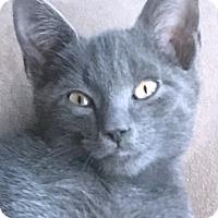 Adopt A Pet :: Tom - Prospect, CT