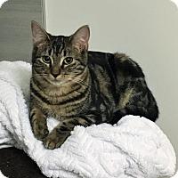 Adopt A Pet :: Nala - Vancouver, BC