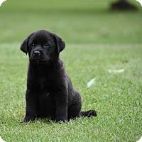 Adopt A Pet :: Ferris - South Dennis, MA