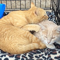 Adopt A Pet :: Cheeto and Taffy - Mt Pleasant, PA