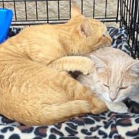 Adopt A Pet :: Cheeto and Taffy - Mt Pleasant, PA