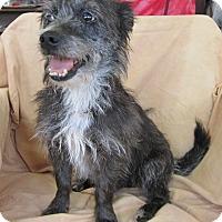 Adopt A Pet :: ALEX - Anna, IL