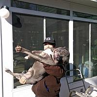 Adopt A Pet :: Puma in Williamsburg, VA - Richmond, VA